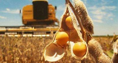 Los precios de la soja y el trigo se desploman