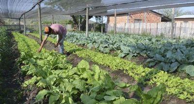 Gobierno invertirá USD 25 millones para asistir a familias agricultoras