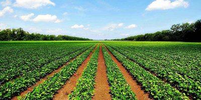 Agricultura e inversiones públicas sustentan el PIB de