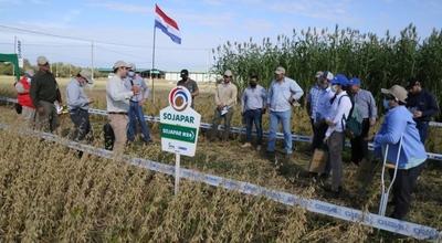 Adaptabilidad de variedades SOJAPAR en el Chaco es valorada por productores