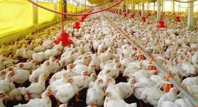 Ocupantes ilegales de propiedad ponen en peligro a industria avícola