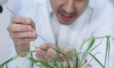 Buscan identificar microorganismos dañinos en cultivos agrícolas del Paraguay