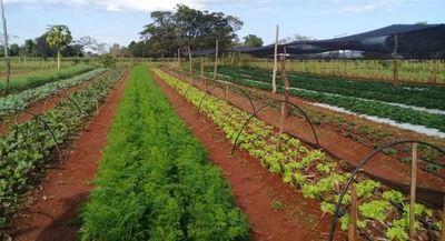 Horticultores de Mallorquín podrán producir todo el año con sistema de riego proveído por ITAIPU