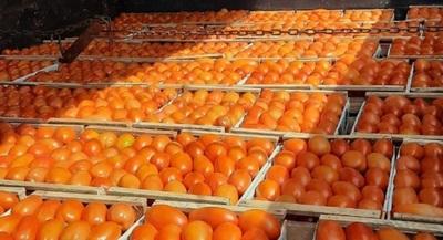 Pobladores de Caaguazú comercializan producción de tomates