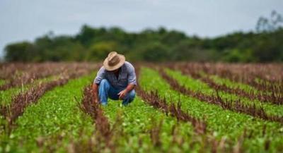 Con la mecanización de 12.000 hectáreas la agricultura familiar permite generar buenos ingresos