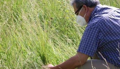Ganaderos de Humaitá logran excelente desarrollo de una nueva variedad de pasto