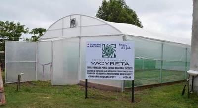 Habilitan moderno invernadero para producción de hortalizas en Ayolas