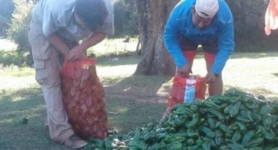 Horticultores que desarrollaron siembra en invernaderos cosechan sus productos