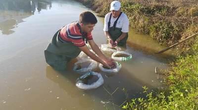 Pequeños productores de Misiones incursionan en la cría de peces en estanque