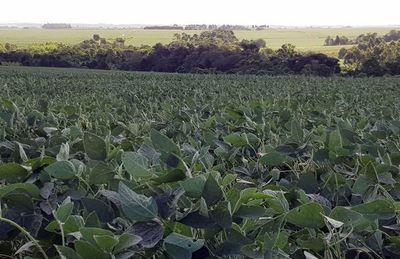 Certificar ayudará a Paraguay a llegar a nuevos mercados