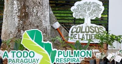 La Nación / Récord de árboles inscritos en 10ª edición