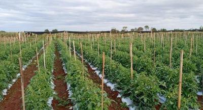 Emprendedor de la zona de Los Cedrales aumenta producción hortícola