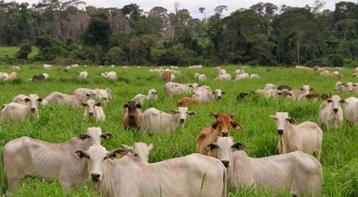La APAP presenta iniciativa de producción de carne sostenible en el Chaco