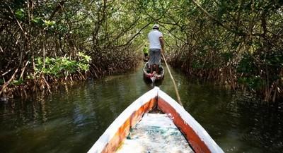 WWF pide a gobiernos evitar el riesgo de otra década perdida para la naturaleza