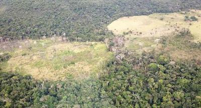 Instituciones solicitan ampliación de la Ley de Deforestación Cero por 10 años