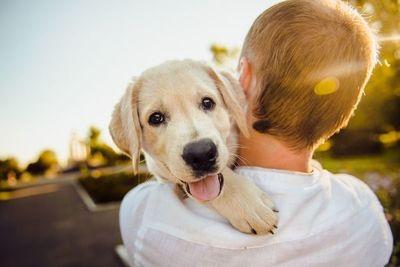 Hoy es el día de los más fieles: los perros