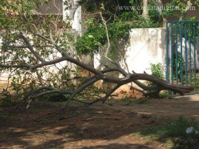 Caida de árboles, accidentes y cortes de suministro eléctrico tras temporal