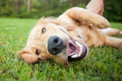 Hoy es el día del perro – Prensa 5