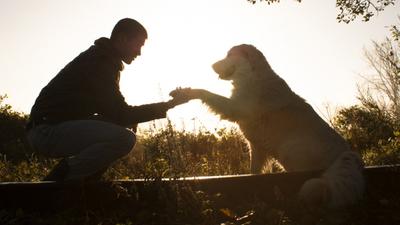 21 de julio: ¡Día Internacional de los Perros!