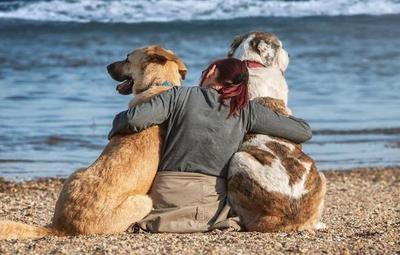 Día Mundial del Perro: concientizan sobre el abandono e importancia de la adopción