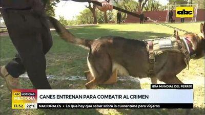 Canes entrenan para combatir el crimen