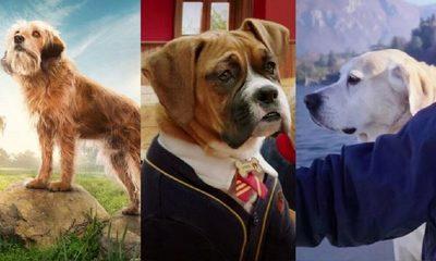 Películas y series de Netflix en donde los perros son protagonistas