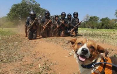 La historia de Chabelo: de vivir en la calle a ser perro Lince