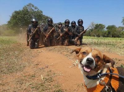 """""""Chabelo"""", el tierno perro callejero que fue rescatado por el Grupo Lince"""