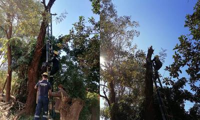 Bomberos rescatan un gato de la copa de un árbol en Coronel Oviedo