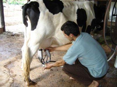El precio de la leche podría aumentar G. 200 por litro, afirman
