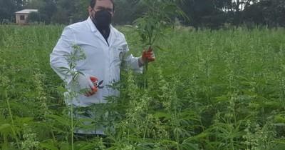 La Nación / Paraguay: primer país en Latinoamérica en exportar alimentos del cannabis industrial