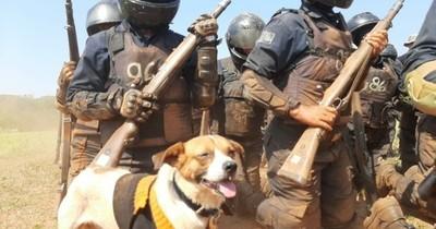 La Nación / Grupo Lince homenajeó a Chabelo en su día: el canino que conquistó sus corazones