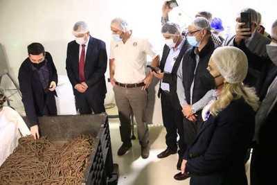 Por primera vez, Paraguay exportará alimentos derivados de cannabis a Europa