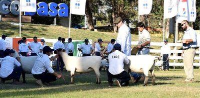 Las mejores ovejas regresan al aprisco, luego de dos años