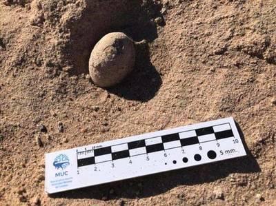 Hallan en el sur de Argentina 160 huevos fósiles de aves prehistóricas
