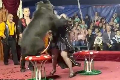 El aterrador momento en que un oso ataca a su entrenadora en medio de un show infantil