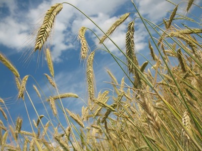 Debatirán sobre perspectivas agrícolas en webinario presentado por Banco Atlas