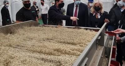 La Nación / Paraguay hace historia en Latinoamérica: primer país exportador de alimentos de cáñamo industrial
