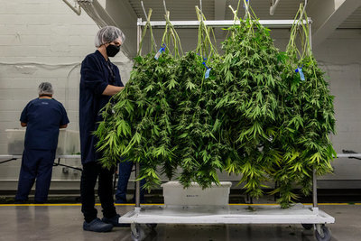 ¡Inédito! Paraguay exportará alimentos derivados de cannabis a Europa