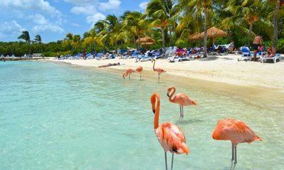 StayPy Internacional: un viaje a Aruba, la isla feliz