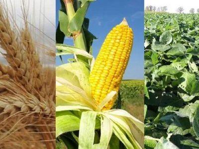Paraguay se destaca en envíos de cereales