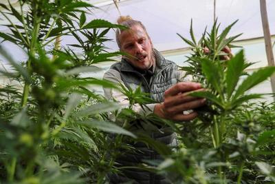 CannAndes, una empresa que ve en el cannabis la materia prima del futuro
