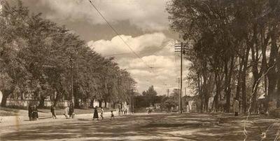 """""""Fiesta del árbol"""" en Asunción: Centenario de un evento olvidado"""