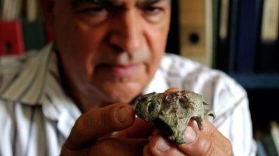Hallan cocodrilo enano de 148 millones de años en Chile