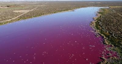 """La Nación / Laguna rosa en Patagonia """"es la imagen de la desidia"""", acusa ambientalista"""