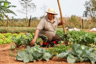 Coreanos apuntalan agricultura sostenible