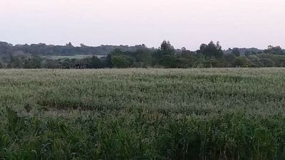 Cultivos: preocupan temperaturas muy bajas pronosticadas para los próximos días