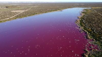 Una laguna se tiñe de rosa en Argentina debido a la contaminación por el vertido de residuos de empresas pesqueras – Prensa 5