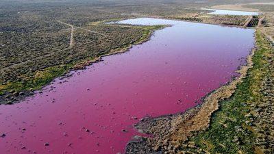 Una laguna se tiñe de rosa debido a la contaminación por el vertido de residuos en Argentina