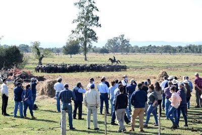 Tras la pandemia, ganadería va recuperando dinamismo